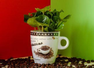 fondi-di-caffè-costiera-caffè-design