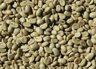 caffè-verde-costiera-caffè-design